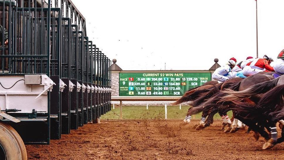 Horses running out of the start gate.